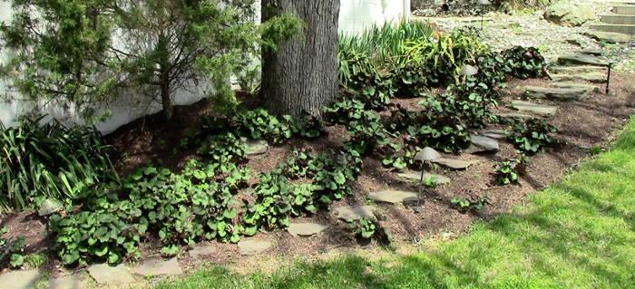 mulching landscape beds
