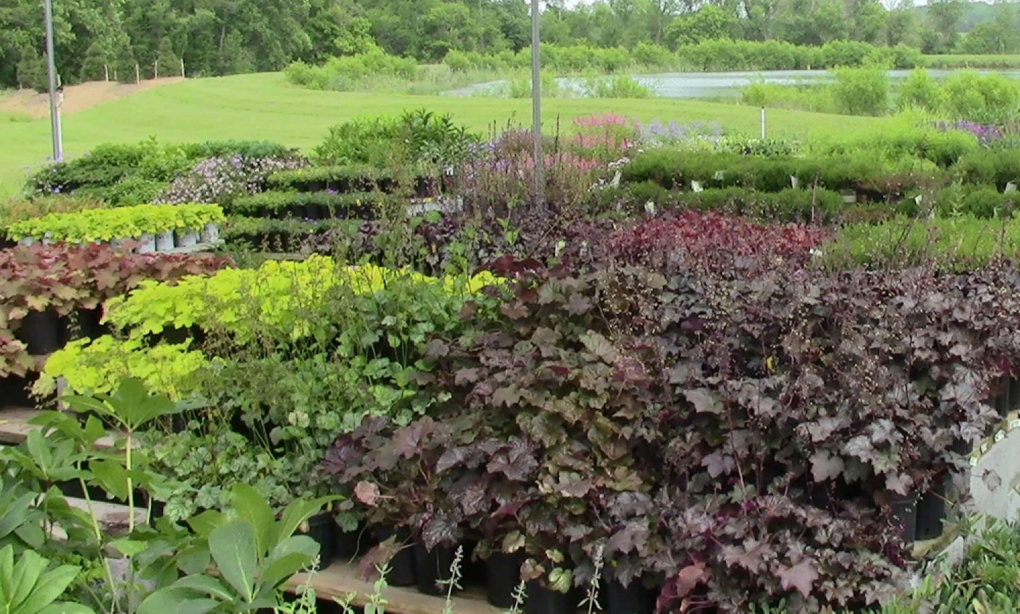 Country Springs Wholesale Nursery